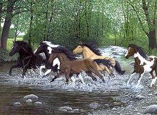 Нарисувай сам картина - Препускащи в река коне - Творчески комплект - продукт