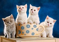 Гладни котенца - пъзел