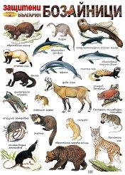 Защитени бозайници в България - стенно учебно табло - 54 x 78 cm -