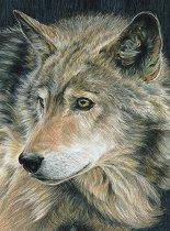 Рисуване по номера с цветни моливи - Вълк