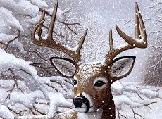 Рисуване по номера с акрилни бои - Елен в снега - Комплект за картина с размери 39 x 30 cm