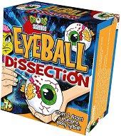 """Дисекция на око - Образователен комплект от серията """"Млад учен"""" - творчески комплект"""