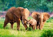 Семейство слонове - пъзел
