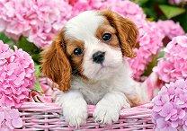 Кученце в розови цветя - пъзел