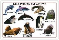 Мини табло: Животните във водата -
