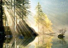 """Сутрешна светлина - Колекция """"Magic Forest"""" - пъзел"""