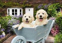 Кученца в количка -