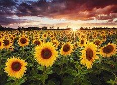 Слънчогледово поле привечер - пъзел