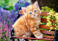 Рижаво котенце -