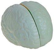 Анатомичен модел на мозък - Образователна играчка -