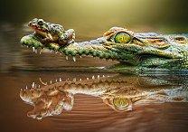 Смелата жаба - пъзел