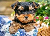 Кученце на пикник - пъзел