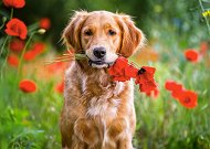 Цветя за теб -