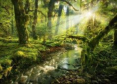 """Духовна градина - Колекция """"Magic Forest"""" -"""