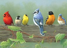 Рисуване по номера - Птици - Комплект за картина с размери 40 x 30 cm