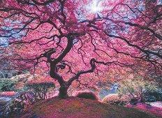 Розово дърво - Мойзес Леви (Moises Levy) - пъзел