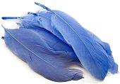 Цветни декоративни пера - Комплект от 10 броя