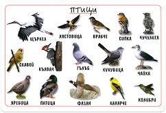 Мини табло: Птици -