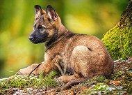 Куче в гората - пъзел