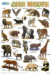 Диви животни -