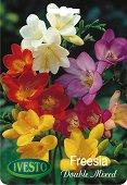 Луковици от Фрезия - Микс от цветове - Опаковка от 6 броя