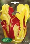 Луковици от Лале - Flaming Parrot - Опаковка от 3 броя