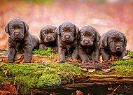 Малки кученца - пъзел