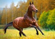 Конски бяг - пъзел