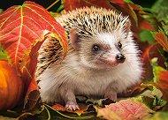 Таралеж в есенни листа - пъзел