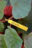 Етикети за надписване на растения - Tree label - Комплект от 40 броя