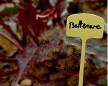 Табелки за надписване на растения - Label 13 - Комплект от 10 броя с маркер