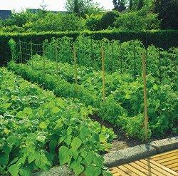 Мрежа за поддържане на зеленчуци - Trellinet