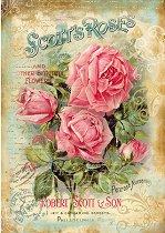 Декупажна хартия - Розите на Скот - Формат А4