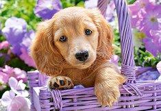 Кученце в кошница -