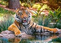 Суматрански тигър - пъзел