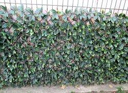 Декоративна ограда с изкуствени листа - Хармоника - Размер 1 x 2 m