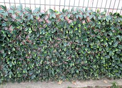 Декоративна ограда с изкуствени листа - Хармоника - Размер 2 x 1 m