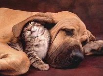 Куче и коте -