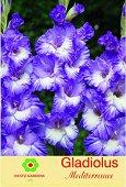 Луковици от Гладиол - Gladiolus Mediterranee