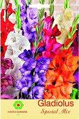 Луковици от Гладиол - микс от цветове - Опаковка от 3 броя