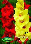Луковици от Гладиол - червен и жълт
