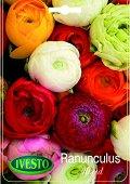 Луковици от Ранункулус - микс от цветове - Опаковка от 4 броя