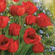 Салфетки за декупаж - Червени лалета - Пакет от 20 броя