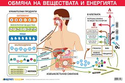 Учебно табло: Обмяна на веществата и енергията -