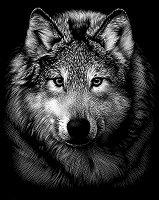 Вълк - Скреч картина с размери 20 x 25 cm