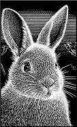 Зайче - Скреч картина с размери 11 x 18 cm