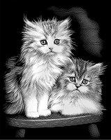 Котки - Скреч картина с размери 20 x 25 cm