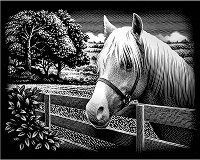 Пони - Скреч картина с размери 20 x 25 cm