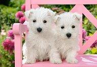 Бели кученца - Териери - пъзел