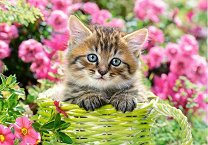Коте сред градински цветя -